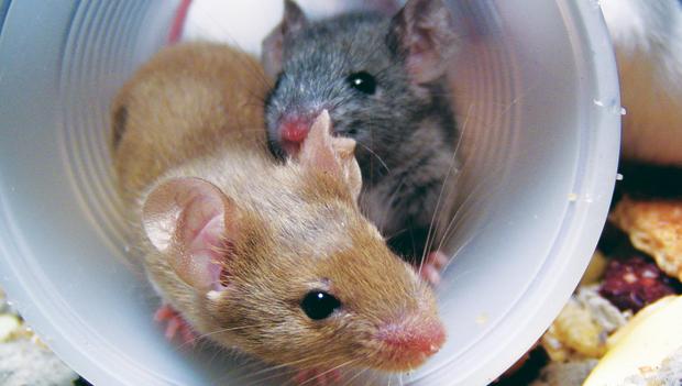 mice-poster